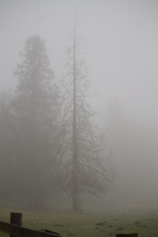 20111204-095.jpg